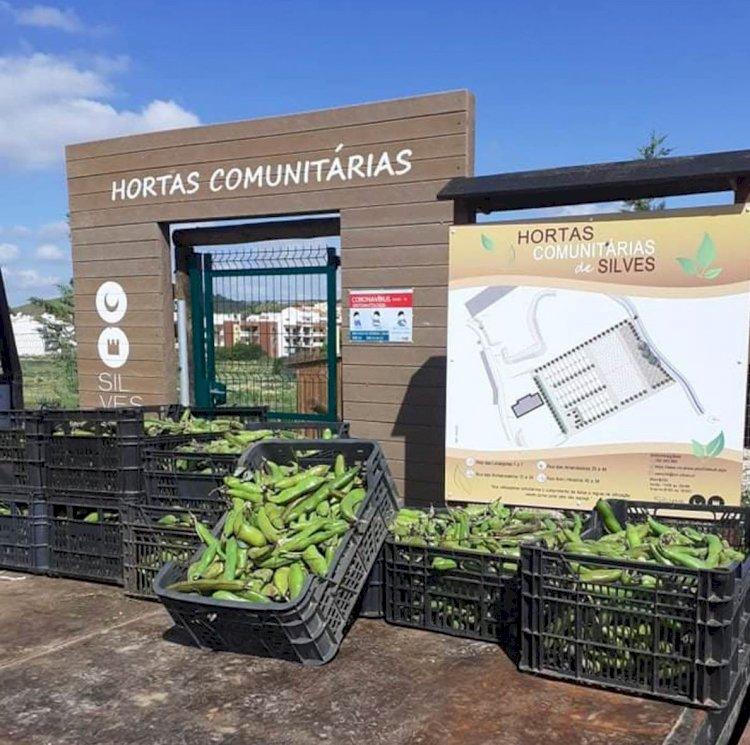 Silves entrega colheitas das hortas comunitárias a instituições do concelho