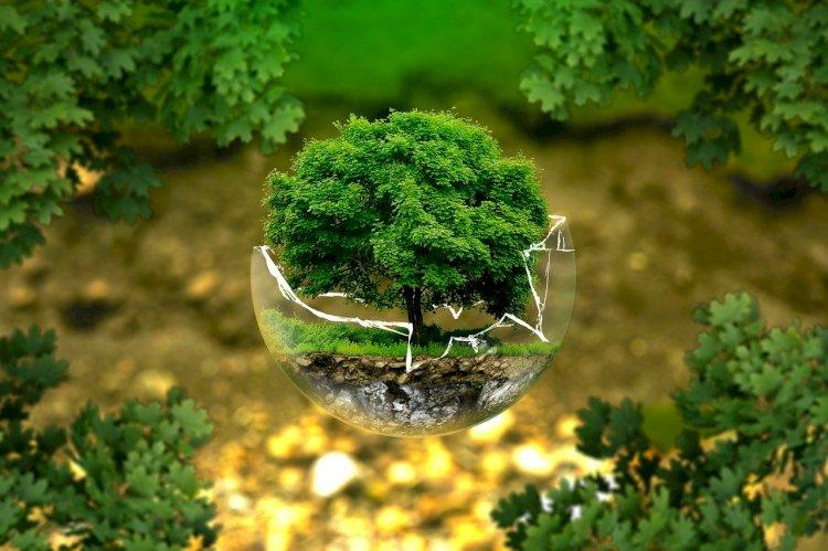 Educação ambiental sem sair de casa