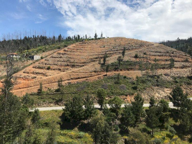 Câmara Municipal da Sertã promoveu plantação de árvores no Concelho