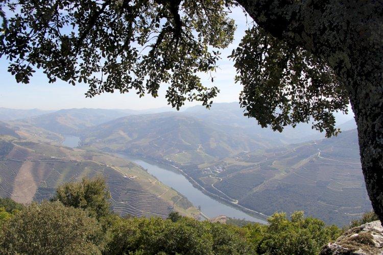 Pelos Trilhos de Portugal-Trilho do Vinho do Porto, Lamego