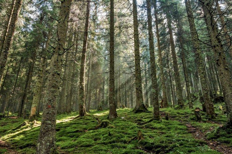Pelos Trilhos de Portugal-Trilho da Floresta, Ovar