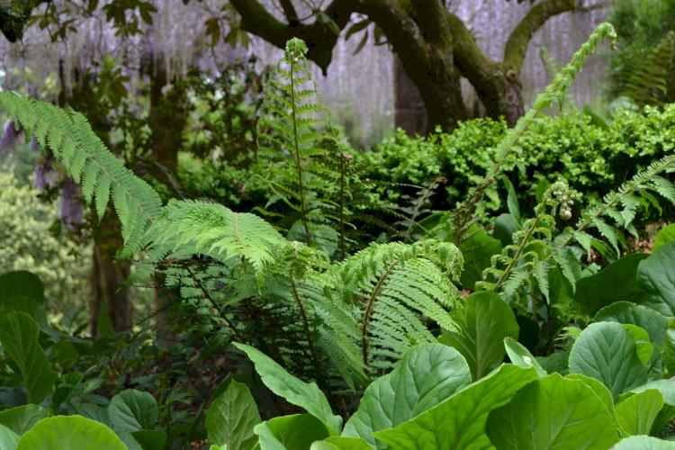 Pelos Trilhos de Portugal-Trilho da Floresta Relíquia, Mealhada