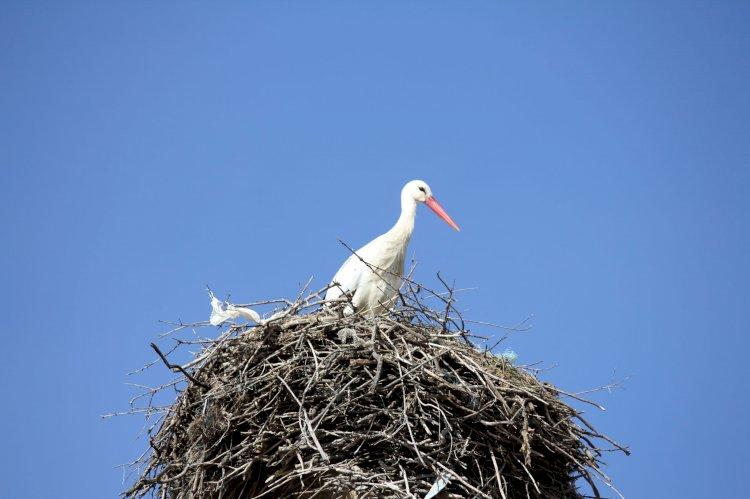 Pelos Trilhos de Portugal-Rota dos Abutres, Idanha-a-Nova