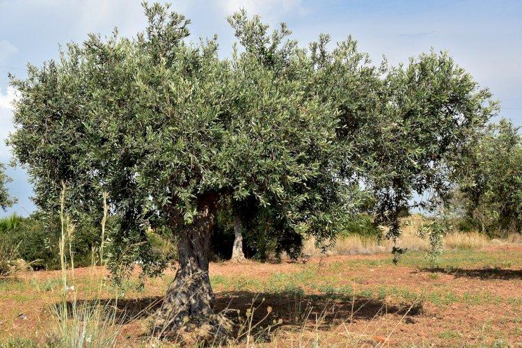 Pelos Trilhos de Portugal-Trilho de Vale de Lobo, Mirandela