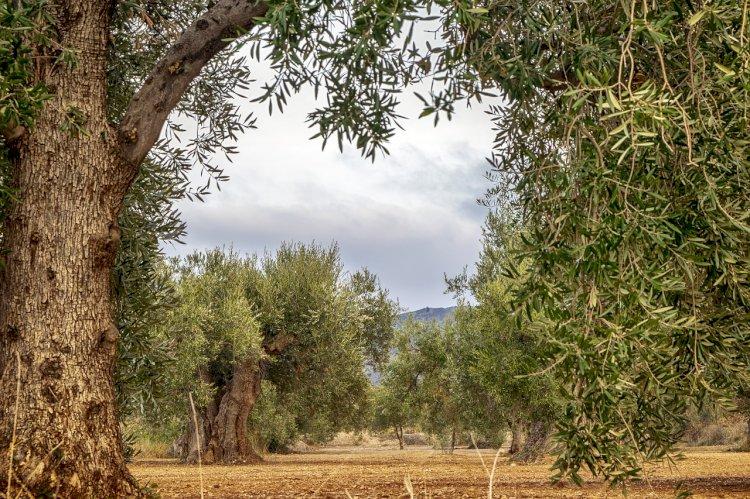 Pelos Trilhos de Portugal-Trilho das Caldeirinhas, Valpaços
