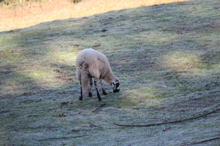 Pelos Trilhos de Portugal-Trilho Interpretativo do Lobo, Vila Pouca de Aguiar