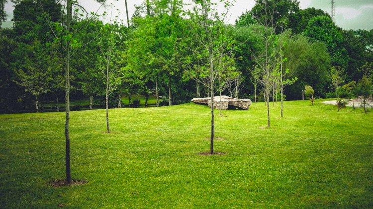 Mais de 250 novas árvores plantadas no Parque do Rio Ul