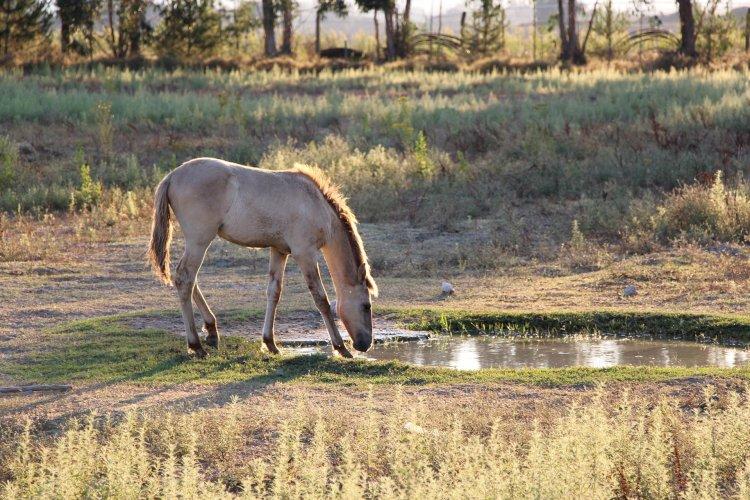 Pelos Trilhos de Portugal-Pela Reserva do Cavalo do Sorraia, Alpiarça