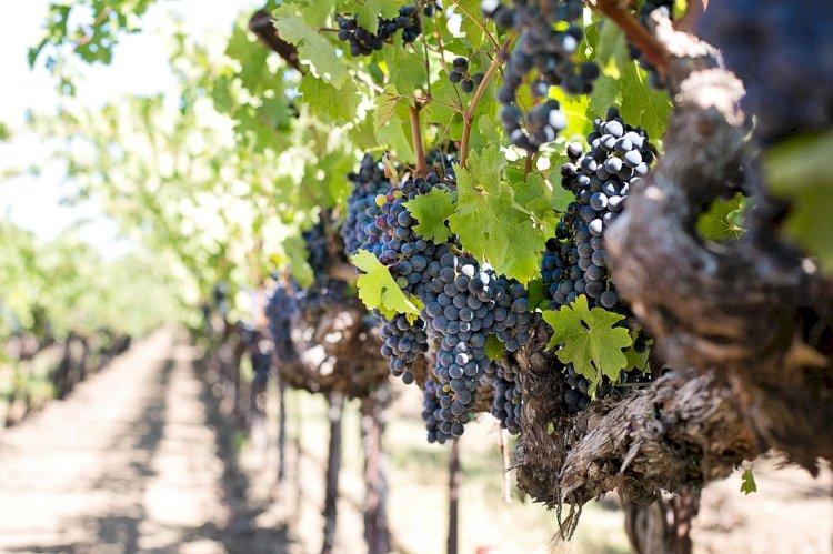 Pelos Trilhos de Portugal-Do Pão ao Vinho, Sardoal