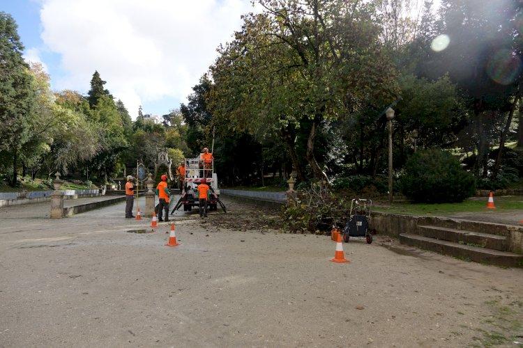 Município de Coimbra inicia intervenção no património arbóreo do Jardim da Sereia