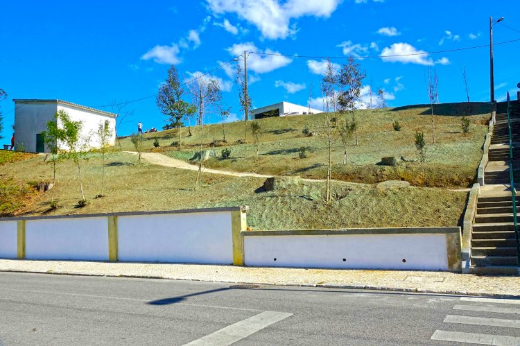 Coimbra vai plantar quase duas mil árvores em 2021
