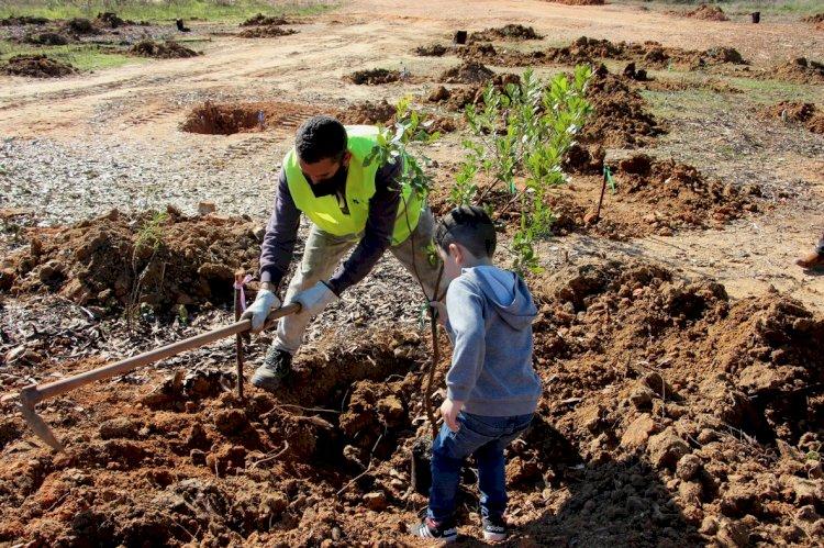 Empreendimento da Terras de Verdelago investe na florestação de espécies autóctones de Castro Marim