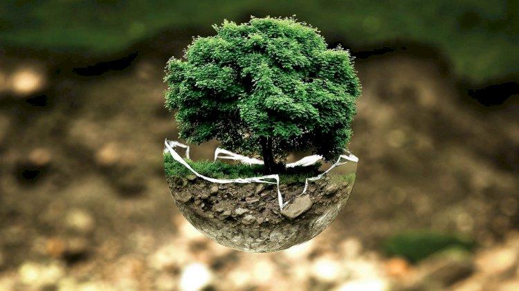 Sintra promove ciclo de teatro sobre educação ambiental