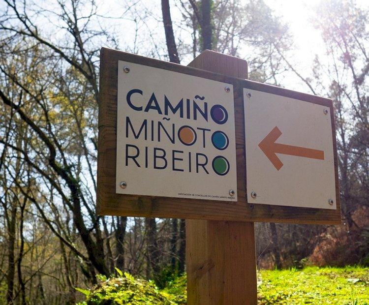 Caminho Minhoto Ribeiro recebe a Compostela