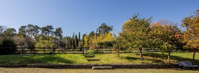 Serralves torna-se membro da Climate Change Alliance of Botanic Gardens