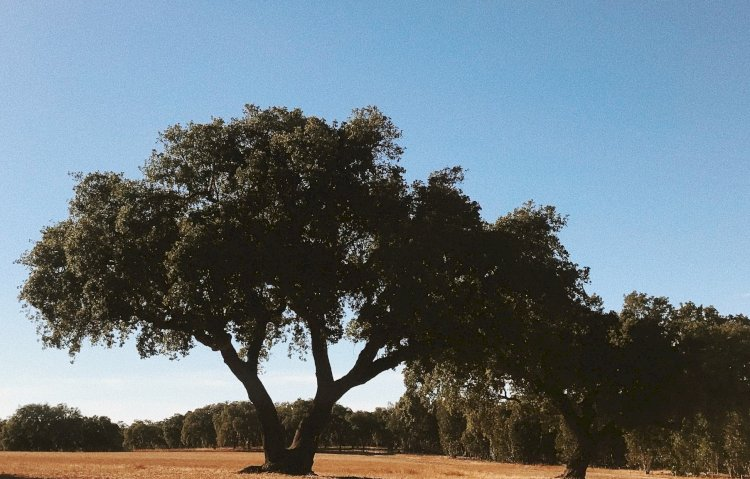 Alandroal vai plantar milhares de árvores para combater as alterações climáticas