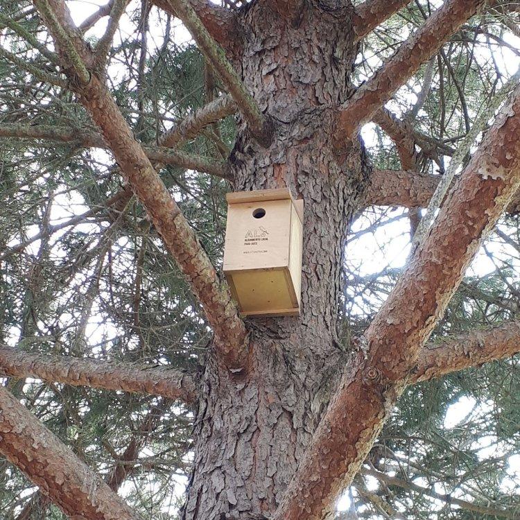 Morgado do Reguengo Resort instala caixas-ninho para apoio à preservação da biodiversidade local