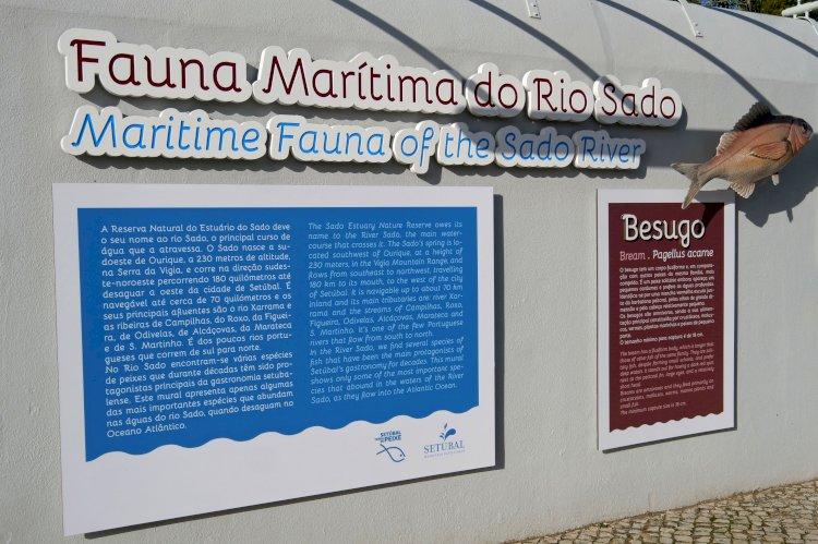 Fauna Marítima do Rio Sado exposta em mural