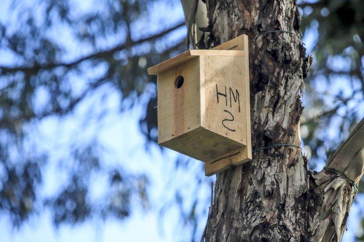 Instaladas caixas-ninho para monitorizar as aves no Estuário do Sado
