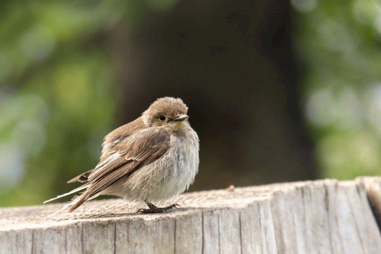 Festival de Observação de Aves & Actividades de Natureza regressa em Outubro